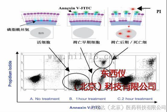 细胞凋亡检测试剂盒 annexin