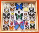 大型昆虫标本盒/蝴蝶标本盒价格/北京生产