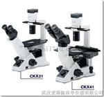 奥林巴斯CKX31倒置生物显微镜