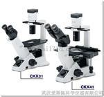 奥林巴斯CKX41倒置生物显微镜