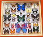 昆虫生活史标本盒 北京哲成 厂家直销 植物标本盒